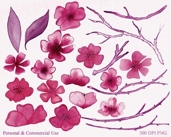 Burgundy Watercolor Sakura Floral in Illustrations - product preview 3