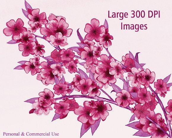 Burgundy Watercolor Sakura Floral in Illustrations - product preview 4