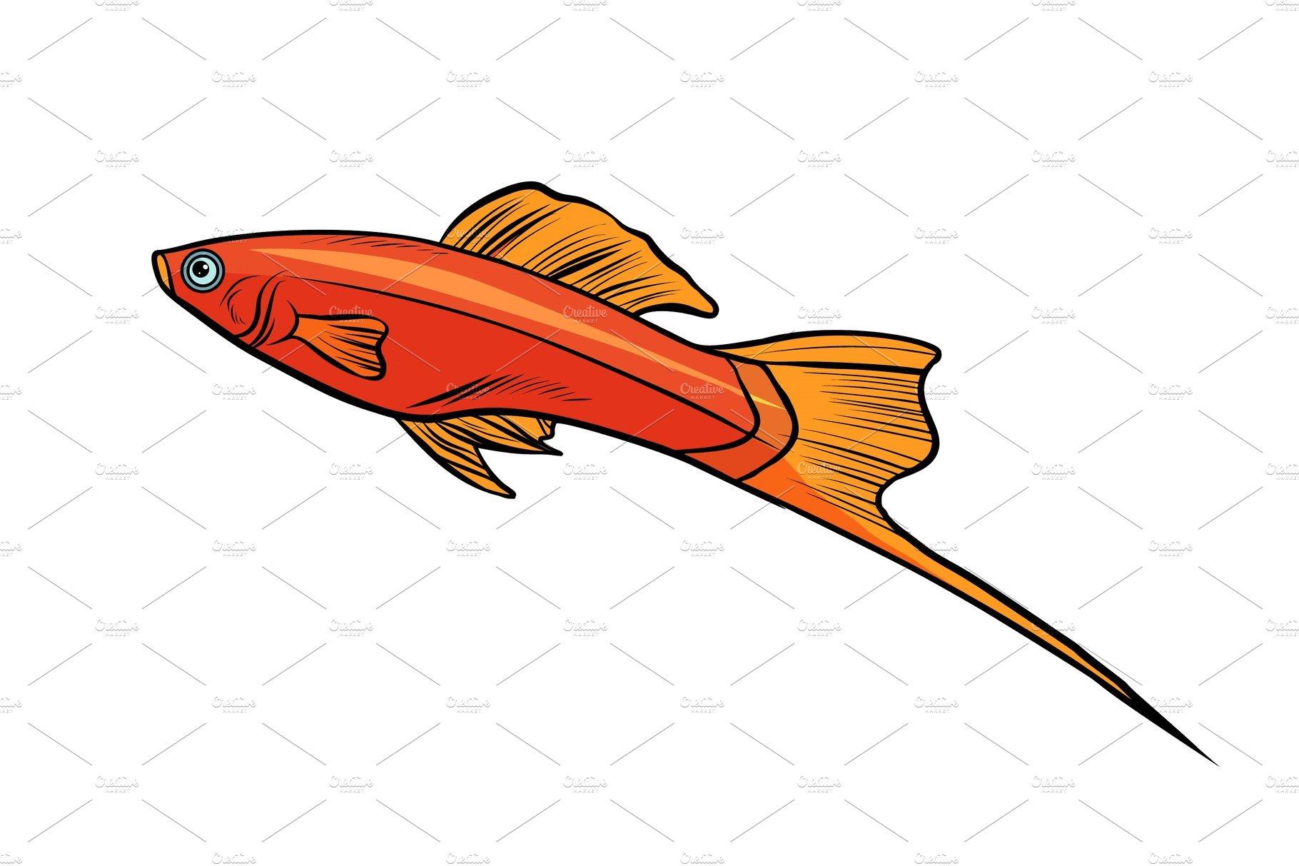 Isolated swordtail aquarium fish ~ Illustrations ~ Creative Market
