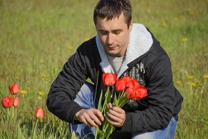 A man in a jacket on a field of tulips. Glade with tulips. A man is tearing tulips in a bouquet