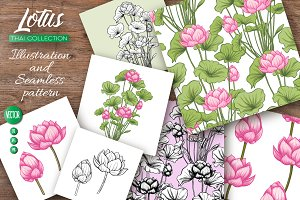 Lotus. Illustrations & Patterns
