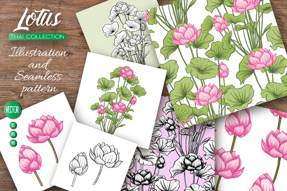 Lotus. Illustrations & Patterns