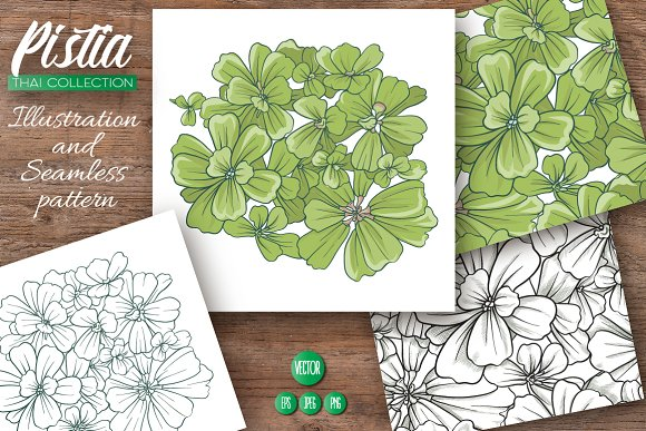 Pistia Illustrations Patterns