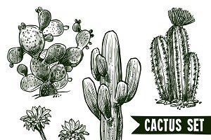 Different cactus sketch set