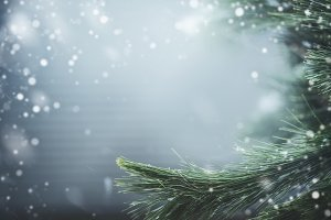 Winter background with fir branches