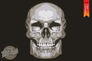 SKULL-Vector illustration