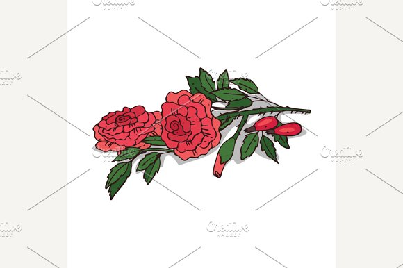 Isolated clipart Rose in Illustrations