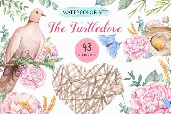 SALE! The Turtledove-Watercolor Set