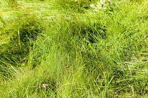 green grass, park