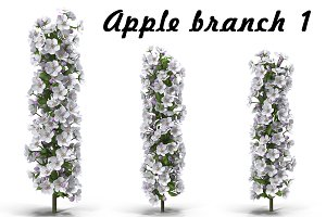 Apple branch   1