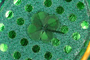 Good Luck Real Four Leaf Clover