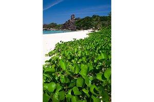 Island with Sailing Boat Rock in Similan National park, Phang Nga, Thailand.