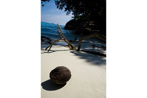 coconut on the sand on a blurred background of a tropical beach