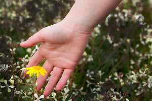 Woman hand caressing a flower