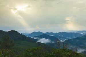 Abundant forest
