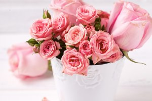 Pink roses flowers  in white pot