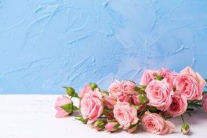 Tender pink roses flowers