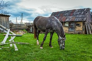 the horse grazes near the house