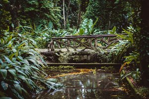 Bridge in rainforest over pond