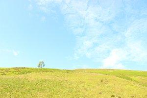 Photo Blue Sky Mountain and Tree