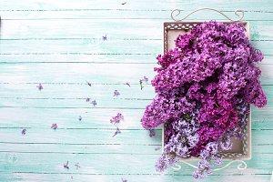 Fresh splendid lilac flowers on tray