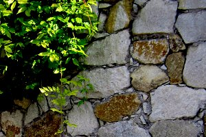 Textured Wall with Green Leaves
