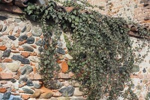 ancient brick wall with ivy background