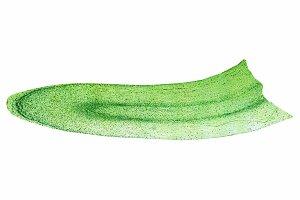 Corn root tip micrograph