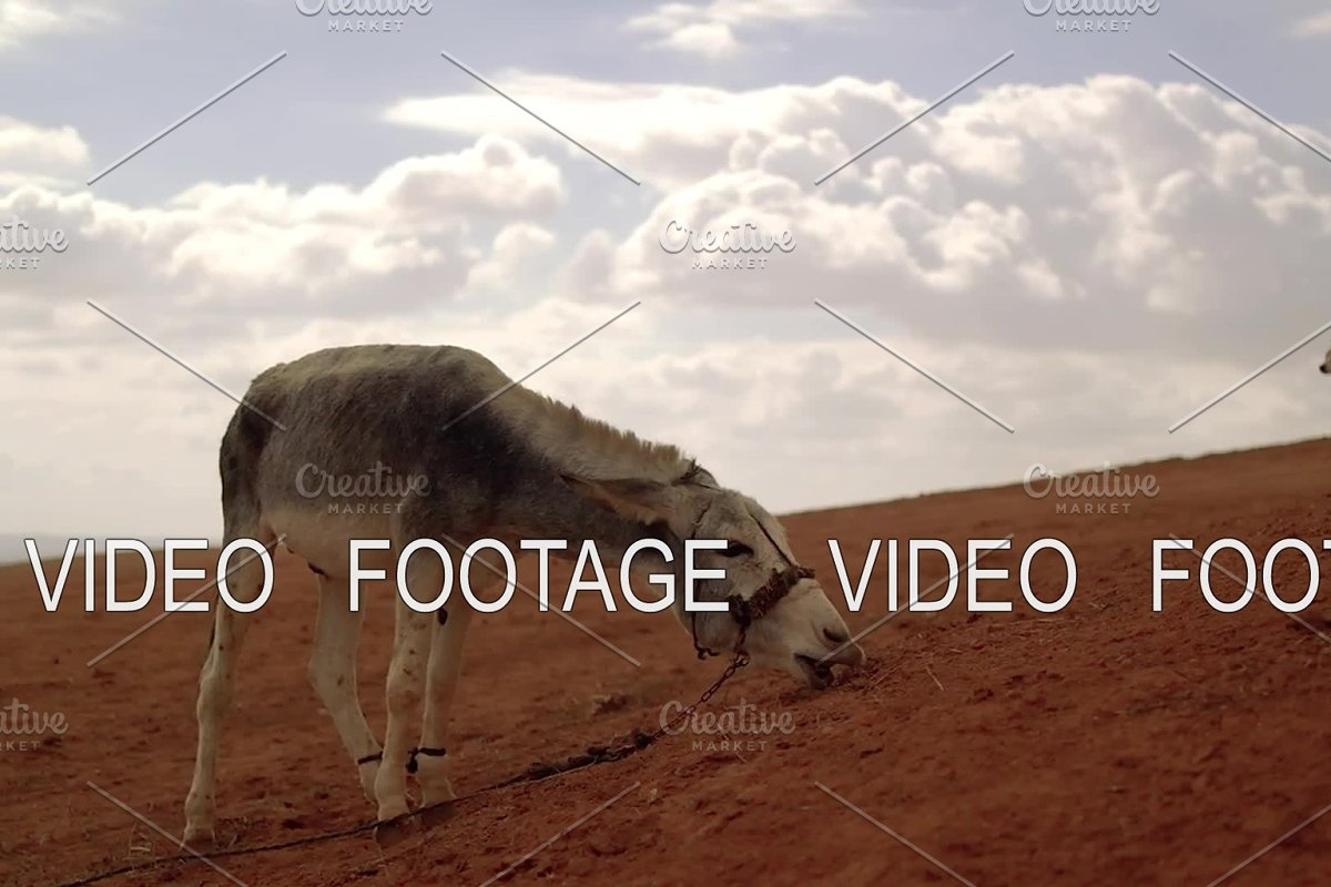 donkey and dog on a hill in the desert. atmospheric cinematic scene