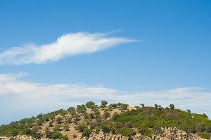 Island with olive plantation.