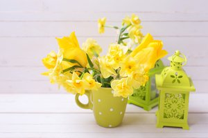 Bright yellow narcissus