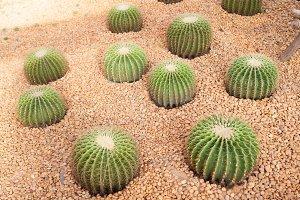 Cactus in stone