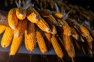 Corn in a cottage