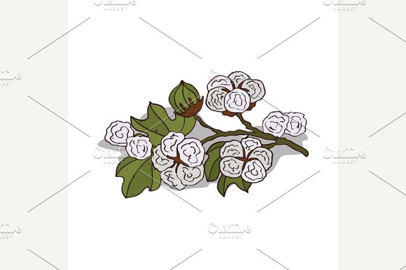 Isolated clipart Cotton