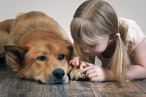 child sees paw big red dog