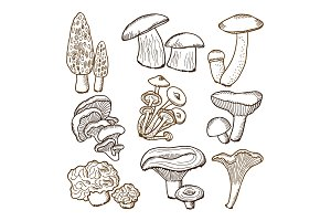 Forest mushrooms in hand drawn style. Vector illustrations