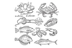Hand drawing vector illustrations of sea food for restaurant menu