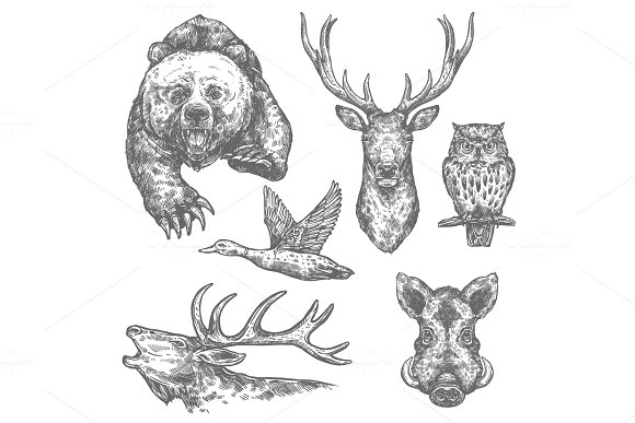 Wild hunting animals and birds sketches