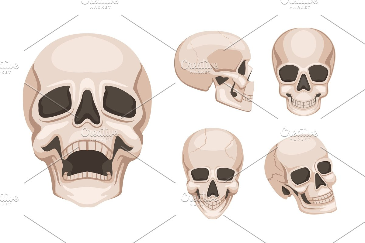 Human skull at different sides. Vector monochrome pictures