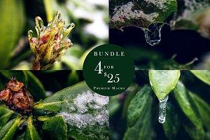 Winter Plants Bundle - Frozen Macro