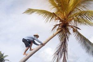 A man climbs on a palm tree