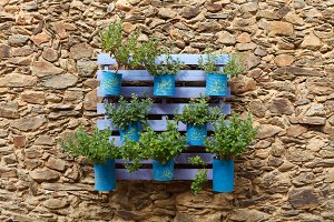 Flowerpot recycling on a stone wall