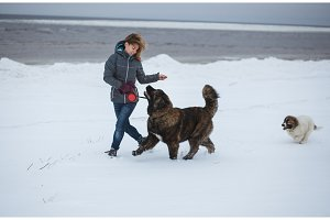 Beautiful young woman and two puppies running on the winter beach. Romantic Holidays at the sea coast