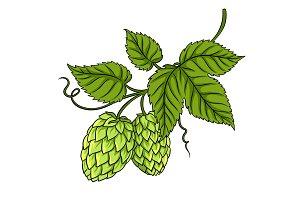 Branch of hops pop art vector illustration