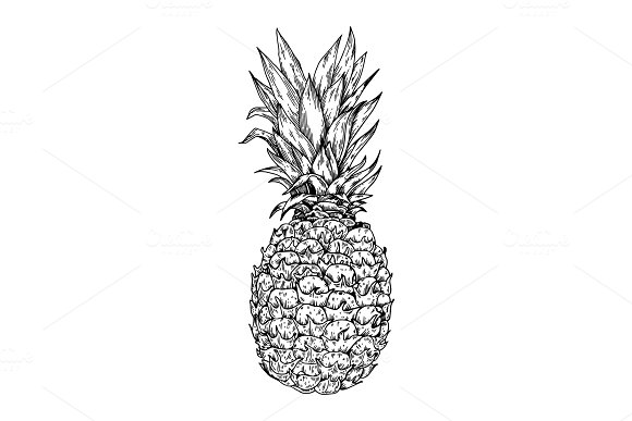 Pineapple Engraving Vector Illustration