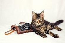 Kitten and camera