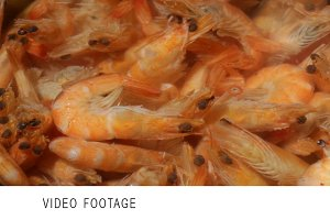 Time lapse. Shrimp are simmered