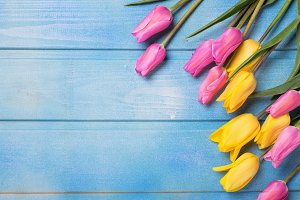 Frame from yellow  and pink tulips