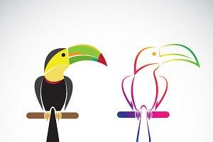Vector of toucan bird design.