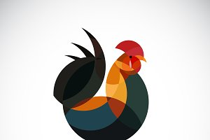 Vector of rooster design. Animal.